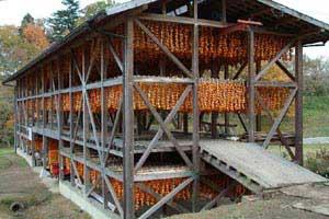 Japán kakiszilva-fajták